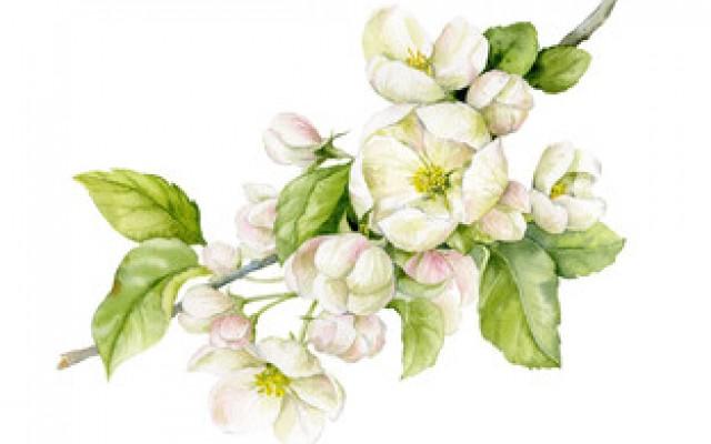 Botanik Illustrationen