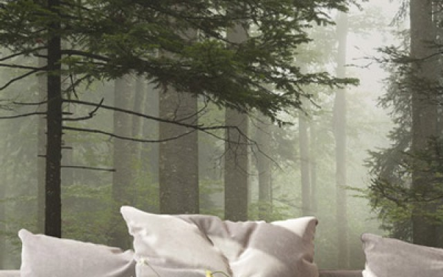 Bäume & Wälder | Panorama