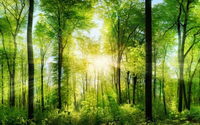 Natur & Bäume